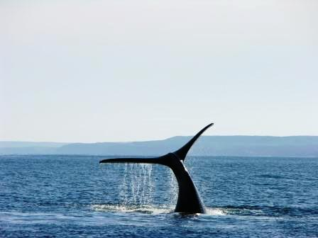 whale tail compressed